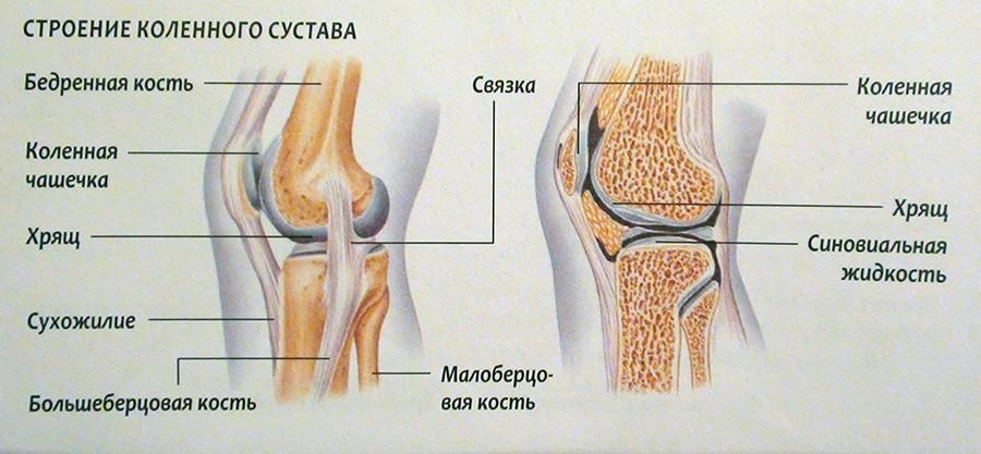 PRP-терапия колена/коленного сустава процедура от ведущих  врачей-специалистов в области ортопедии в ПМГМУ имени Сеченова