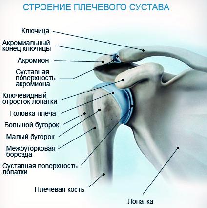 PRP-терапия плеча/плечевого сустава процедура стоимость от ведущих врачей-специалистов в области ортопедии в ПМГМУ имени Сеченова.